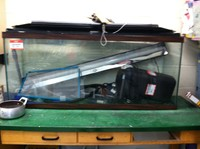 Our trout tanks and equipment!