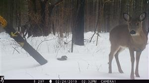 Trail Cam Phtoto from WR Nature Trails